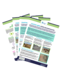 Coastal Natural Flood Management Toolkit